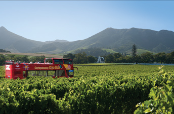 City Sightseeing Cape Town - Cape Winelands Tour